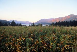Wildflower meadow in front of Skamania Lodge.